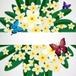 Eps10 Floral design background. Plumeria flowers with butterflie — Stock Vector #58514085