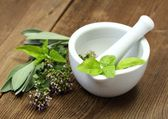 Fresh herbs and young plants — Stock Photo