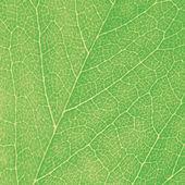 Groene blad macro getextureerde close-up, grote gedetailleerde abstracte achtergrond textuur — Stockfoto