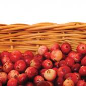 Fresh mountain cranberries, isolated Vaccinium vitis-idaea cowberry basket, large detailed Rhodococcum — Stock Photo