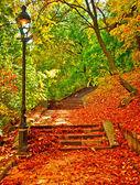 Прекрасный парк на осень — Стоковое фото