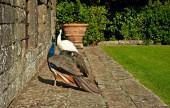 Kuşlar yeşil bahçe — Stok fotoğraf