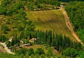 Nice vineyard in Italy — Stock Photo
