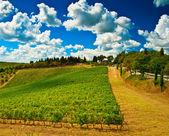 Nice vineyard in Italy — Stock Photo