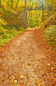 Autumn park with trail — Stock Photo