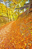 Jesień park z szlak — Zdjęcie stockowe