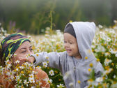 Little boy on the camomile meadow — Stock Photo