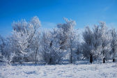 Winter park in snow. beautiful winter landscape with road and sn — 图库照片