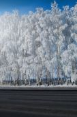 Winter park in snow. beautiful winter landscape with road and sn — Stock Photo