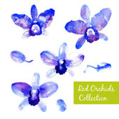 Collection of blue watercolor orchids — Stock Vector