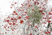 Winter fairytail — Stock Photo