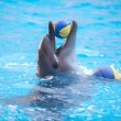 Dolphin playing with a yellow ball in the blue water — Стоковое фото #77858470