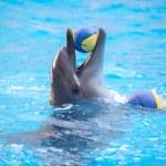 Delfino che gioca con una palla gialla nell'acqua blu — Foto Stock #77858470