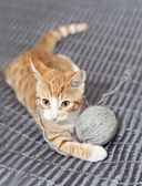 Ginger cat with yarn ball — ストック写真