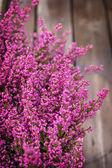 Pink heather — Stock Photo