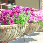 Balcony flower box — Stock Photo #73091715