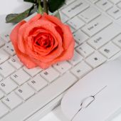 Rose on the keyboard — Stock Photo