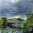 Trail in the Everglades — Stock Photo #63328243