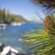 Beautiful Pine Cone on Tree Near Lake Shore — Stock Photo #54209125