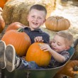 Two Little Boys Playing in Wheelbarrow at the Pumpkin Patch — Stock Photo #54416815