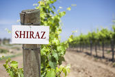 Shiraz Sign On Vineyard Post — Stock Photo