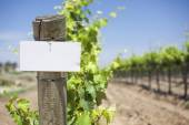 Grape Wine Vineyard with Wooden Post Holding Blank Sign — Foto Stock