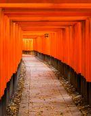 Fushimi Inari Taisha Shrine in Kyoto, — Stock Photo