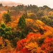 Kiyomizu-dera Temple in Kyoto, Japan — Stock Photo #72795355