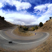 Curve in Road — Stock Photo