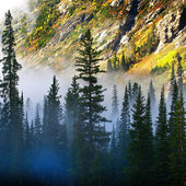 Fog and Isolated Pine Tree on Rugged Mountainside — Stock Photo