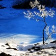 Frozen Small Tree with Snow — Stock Photo #65377949