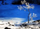 Frozen Small Tree with Snow — Stock Photo
