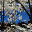 Frozen Trees Blue Background Winter Cold — Stock Photo #67262033