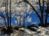Frozen Trees Blue Background Winter Cold — Stock fotografie