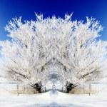 Frost on Tree — Stock Photo #67901973