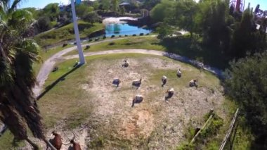 Busch Gardens skyride — Stock Video
