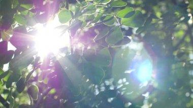 Sun glaring through the leafs — Stock Video