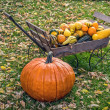 Autumn Pumpkins and Gourds — Zdjęcie stockowe #52495133