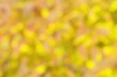 Fall Blur — Stockfoto