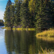 Trout River — Stock Photo #53138213