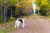 Trans Canada Trail — Stock Photo