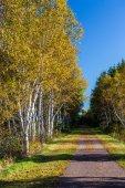Transcanada Trail — Stock Photo