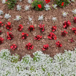 Annual Flower Bed — Stock Photo #67188897