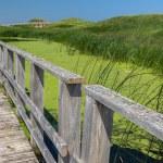 Marsh Walk — Stock Photo #75076355