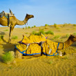 Camels — Stock Photo #57398653