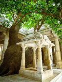 Tree in Ranakpur Jain Temple — Stok fotoğraf
