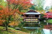 Autumn japanese garden — Stock Photo