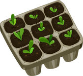 Seedling Tray with Saplings — Stock Photo
