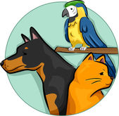 Pets Design Elements — Stock Photo