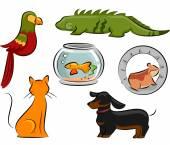 Pet Design Elements — Stock Photo